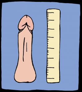penis en voorhuid