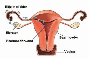 menstruatie & ovulatie