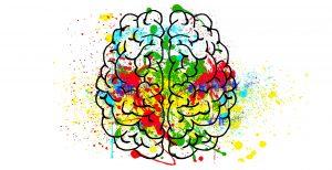 ontwikkeling hersenen